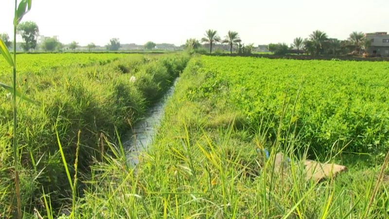 بالفيديو: كيف يهدد التغيّر المناخي الأراضي الخصبة؟