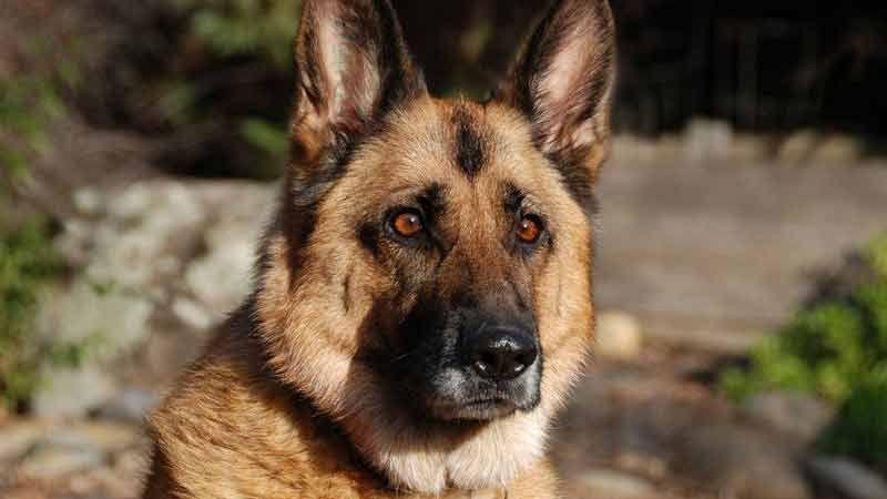 هكذا أنقذت قوى الأمن كلبًا..