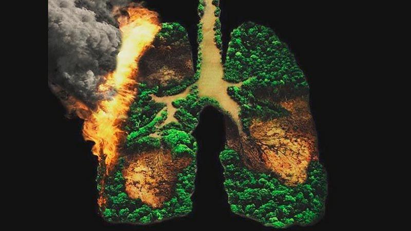 """الحرائق تضرب """"رئة الأرض"""""""