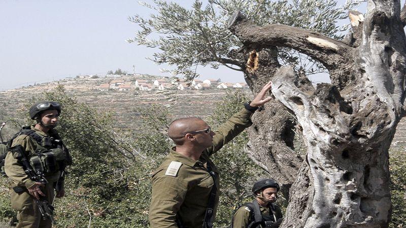 الاحتلال يعتقل سبعة فلسطينيين في الضفة الغربية ويضرم النار بأشجار الزيتون