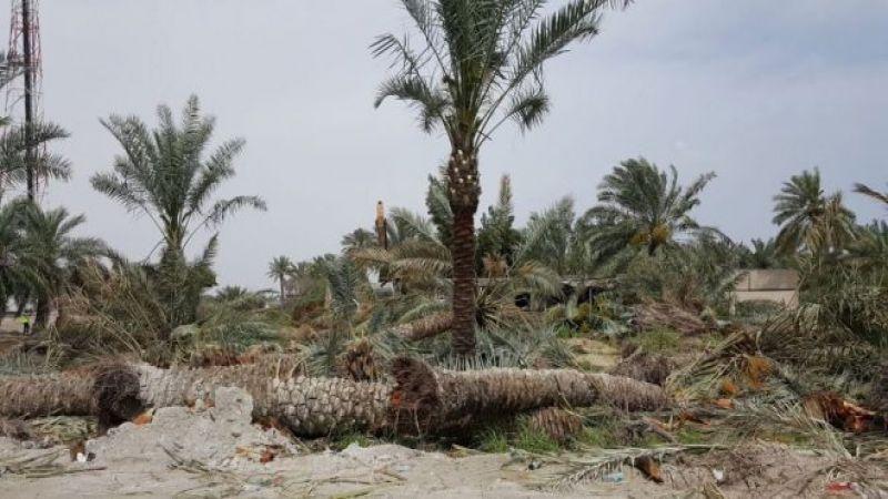العوامية: حتى أشجار النخيل لم تسلم من بطش السلطات السعودية!