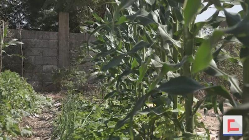 الزراعة البيئية أسلوب زراعي جديد في الجنوب.. فماذا يميزه؟
