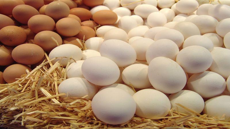 هل يمكن تناول البيض يوميًا؟