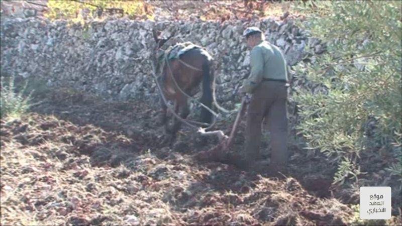 قصة عشق بين المزارع وأرضه