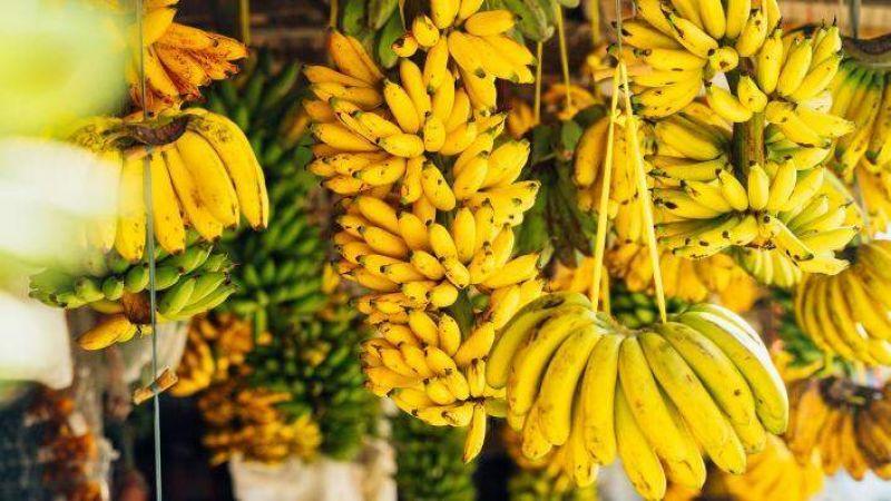 هكذا سارت قوافل الموز إلى سوريا