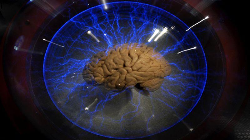 إكتشافات جديدة حول الدماغ في العام 2019