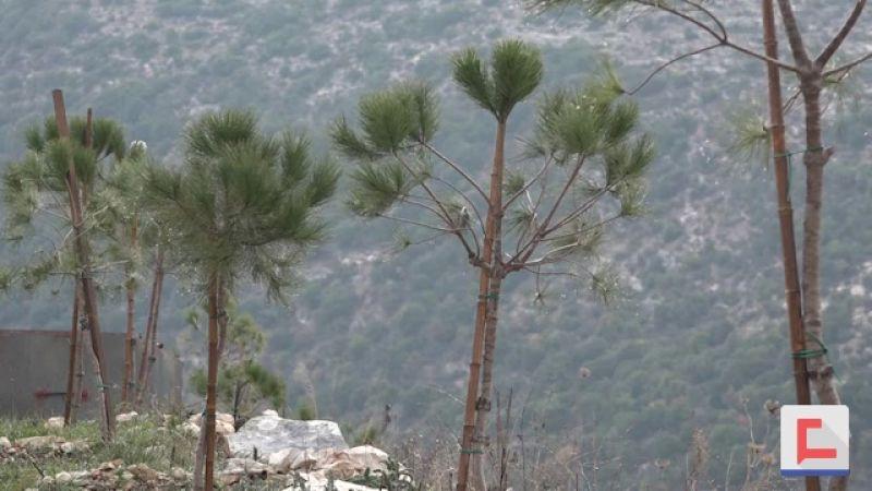 محمية الرسول الأكرم(ص) ـ خربة سلم ترفع نسبة الغطاء الاخضر