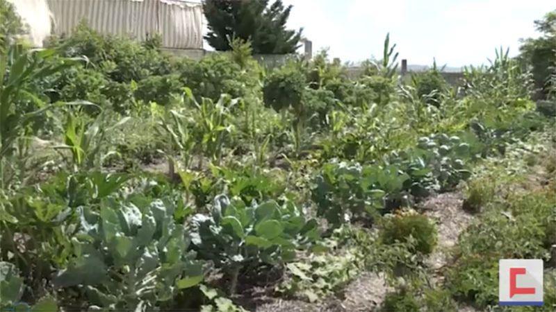 """في زمن الحصار .. قرى جنوبية تطبّق نموذج """"الزراعة العضوية"""""""