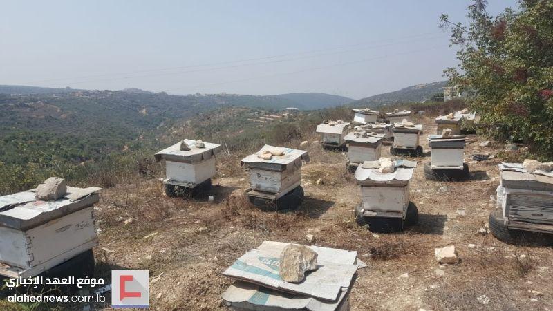 """أزمة في تصريف إنتاج العسل ومربّو النحل يُفصّلون لـ""""العهد"""" مِحنتهم"""