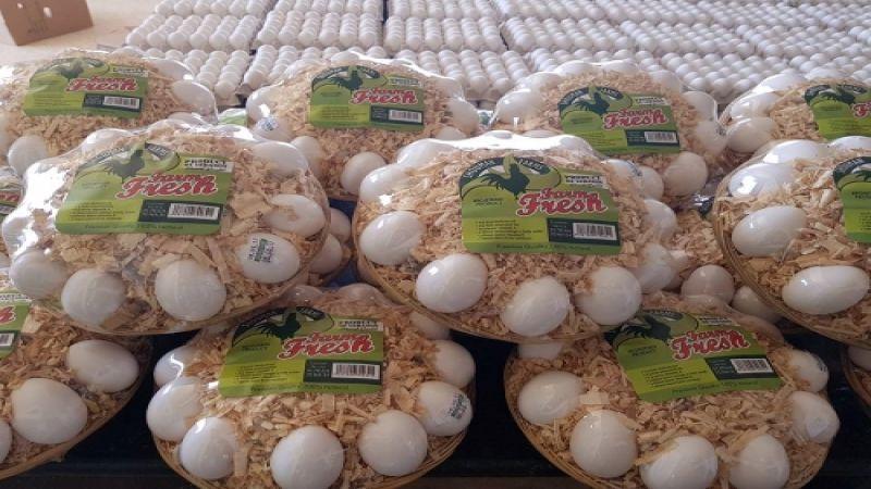 البيض يختفي من الأسواق والعلف مفقود.. ماذا يحصل؟