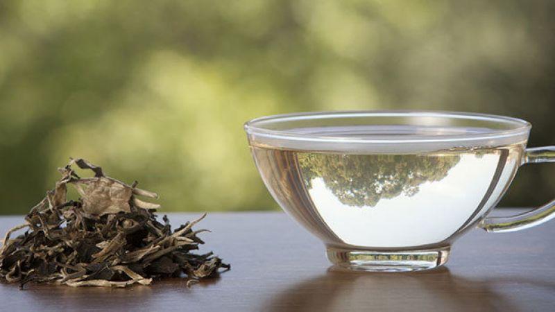 ماذا تعرف عن الشاي الأبيض؟