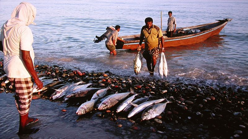 العدوان يُبيد الثروة السمكية في اليمن