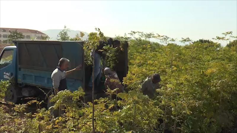 بالفيديو: انطلاق حملات التّشجير السّنوية في الجنوب