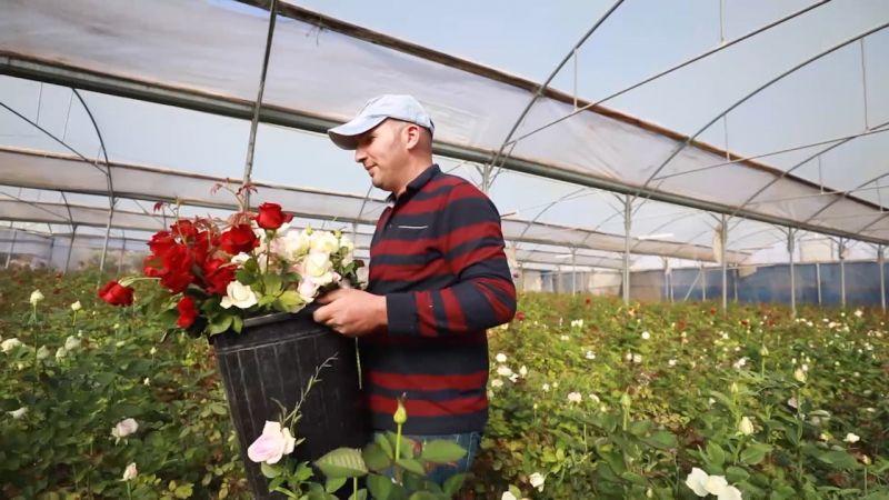 لأول مرة .. أزهار الثلج والجربيرا في فلسطين