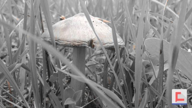 انطلاقة موسم الفطر البري في الجنوب.. حالات تسمم وتحذيرات