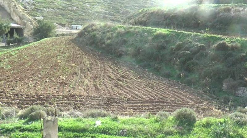 الجهاد الزراعي متواصل .. استصلاح أراضٍ وزراعة آلاف الدونمات