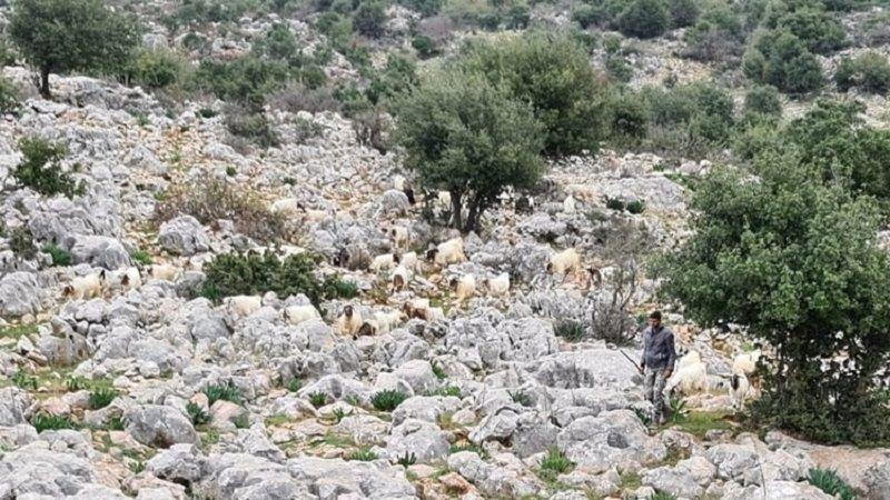 """بعد فشلهم باختطاف شقيق زهرة .. """"قطيع الماعز"""" يغلب قوات الإحتلال!"""