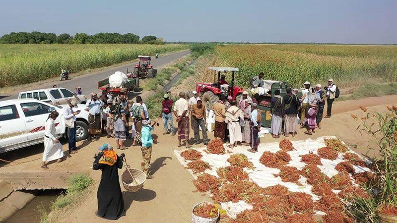 من رماد العدوان يزهر اليمن: ما ذل شعبٌ يأكل مما يزرع