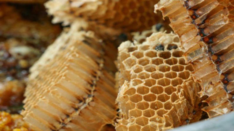 عكبر النحل (البروبوليس)