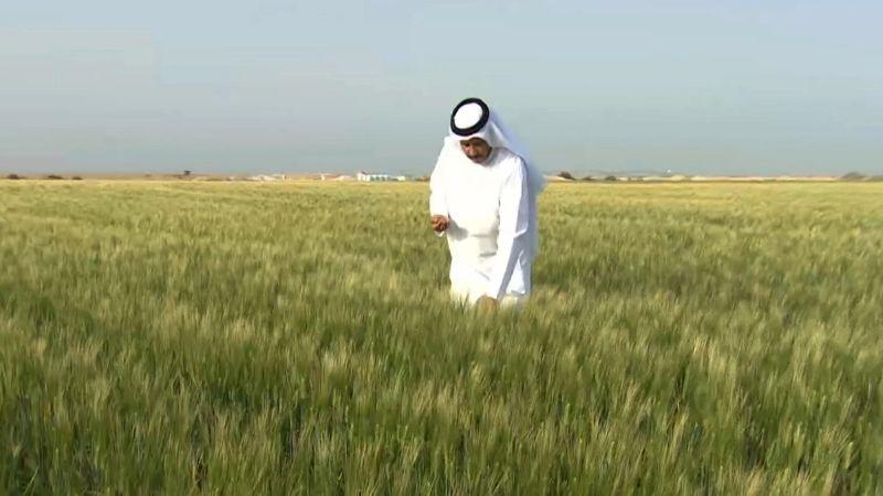 قطر تتجه لإنتاج أطنان من القمح للمرة الأولى
