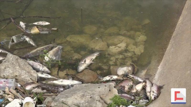 أسماك الكارب تلفظ أنفاسها الأخيرة على ضفاف بحيرة القرعون