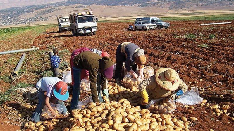 الحظر السعودي على الصادرات الزراعية اللبنانية ... ما المغزى السياسي؟