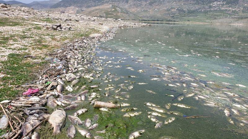 وزارة الصحة تنبّه من خطورة استهلاك أسماك غير معروفة المصدر