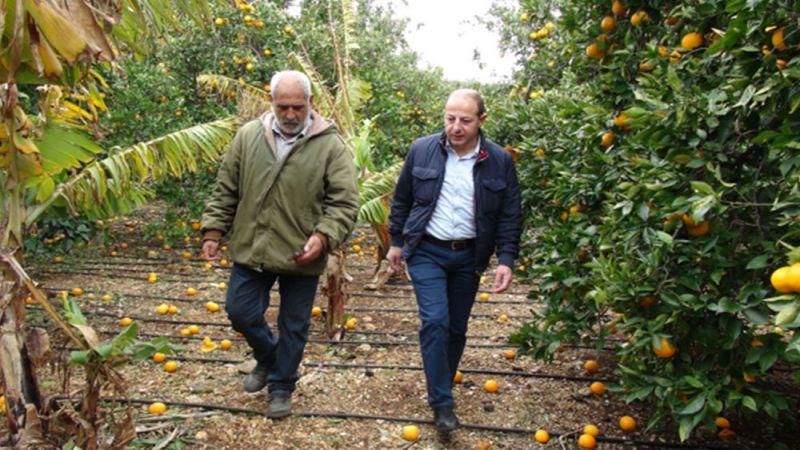 أزمة الكساد الزراعي في لبنان: كيف تُحلّ وهل من مخارج؟
