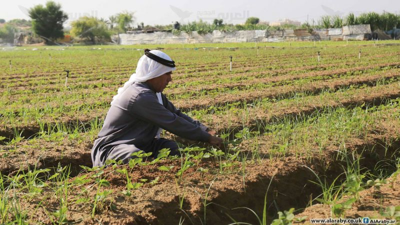 زراعة غزة تردّ على حظر الاحتلال لمنتجاتها
