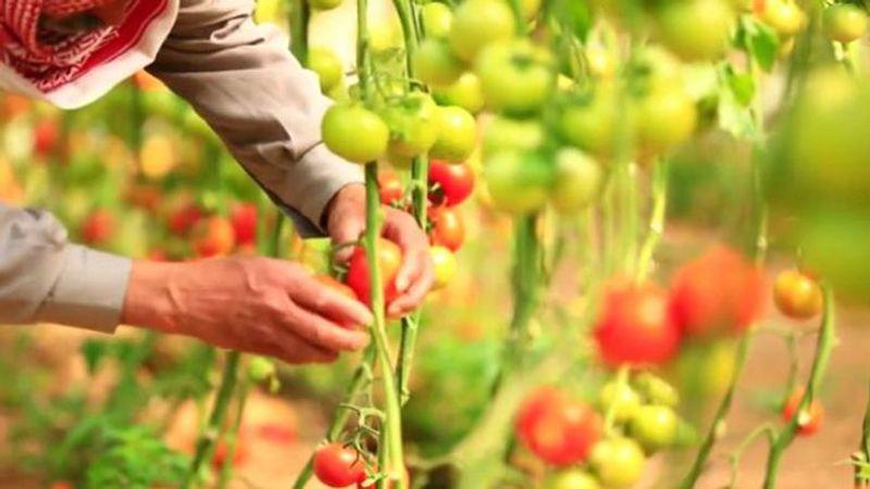 آمال مزارعي غزة تتضاءل بعد اجراءات العدو التعجيزية