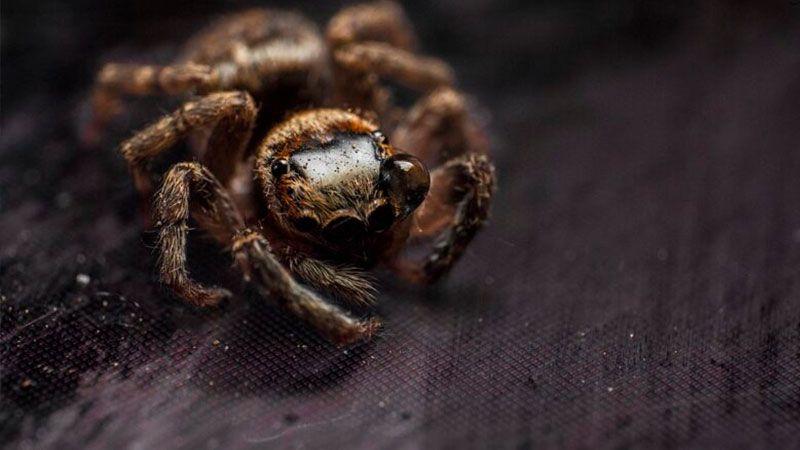 ما علاقة سمّ العنكبوت بالأزمة القلبية؟