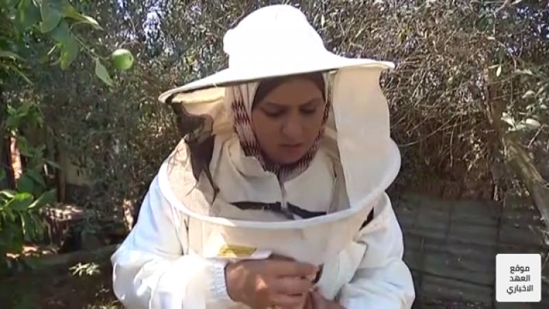 أوّل مربية نحل في قطاع غزة.. ماذا تقول عن تجربتها؟