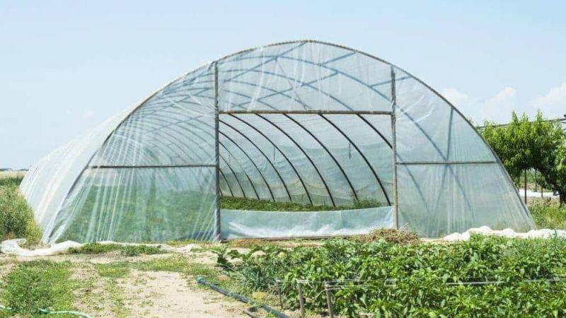 هل تطوي الزراعة في الخيم البلاستيكية صفحة مواسم التبغ؟