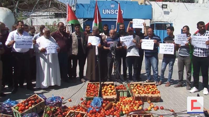 مزارعو غزة يرفضون شرط الاحتلال تصدير الطماطم منزوعة العنق