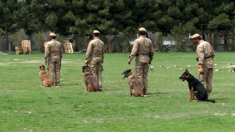 الكلاب المدرّبة لمكافحة الألغام!