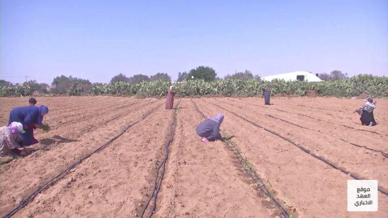 سيدات فلسطينيات يتحدين الفقر والبطالة بالزراعة على خطوط النار