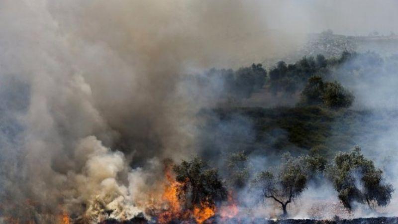 فلسطين المحتلّة: اعتقالات وإحراق لأشجار الزيتون في الضفة الغربية